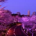 写真: 東京パープルタウン