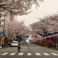 Photos: 播磨坂桜並木交差点