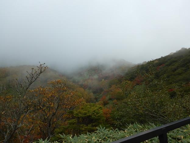 紅葉が雲に隠れる