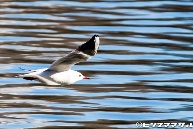 写真: 水鳥 01