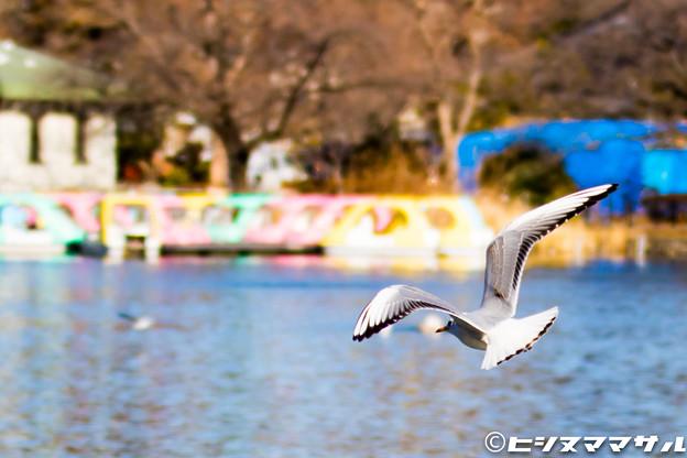 Photos: 水鳥 04