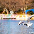水鳥 04