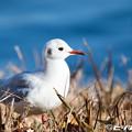 Photos: 水鳥 05