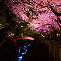 夜桜 04
