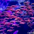 写真: お魚いっぱい
