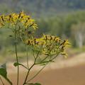 写真: 不明な花P9183781s