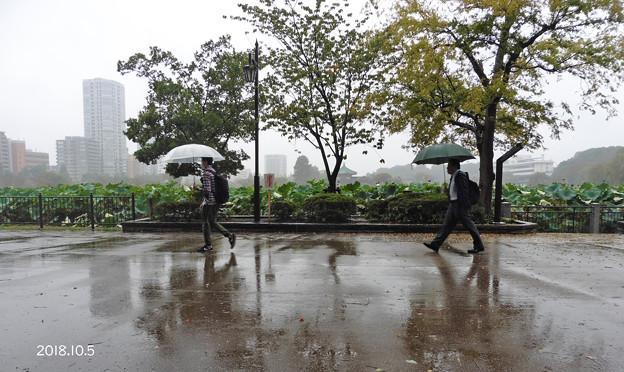 雨005_534ame