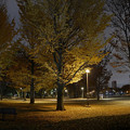 夜の公園20181205_119_stitch_yoru