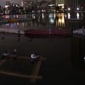 夜の池0211_186c_yoru