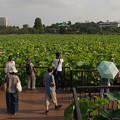 Photos: 不忍池0730_65ike