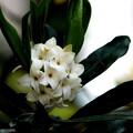 写真: なんの花か香る