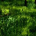 緑葉の粒子