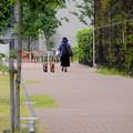 写真: 散歩