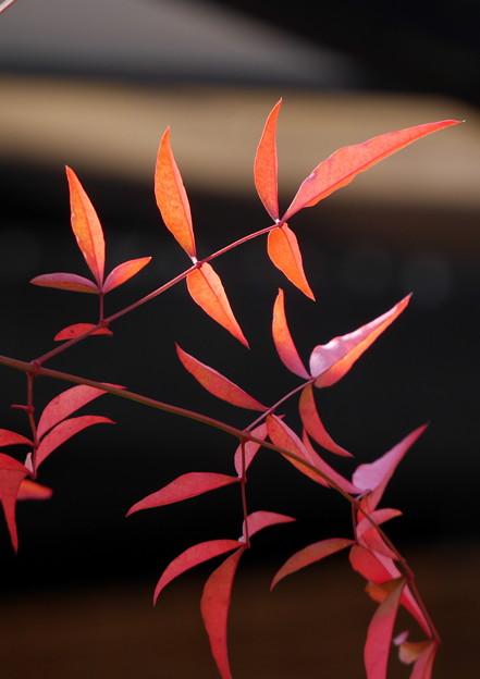 写真: 秋彩集光