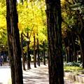 Photos: 樹間