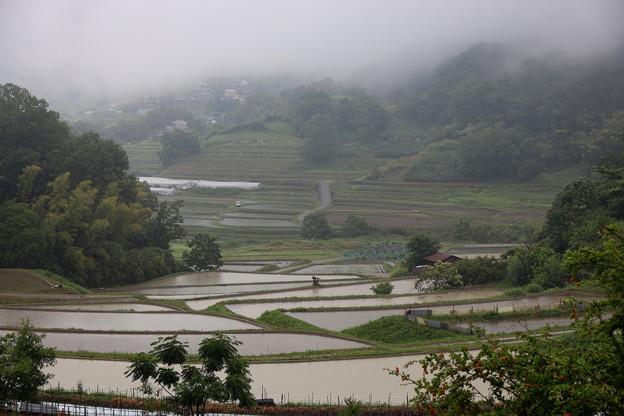 20190607 小雨の中稲渕へ 1