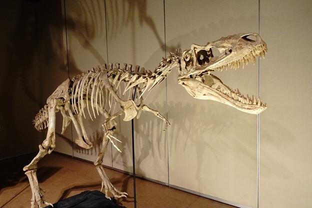 Photos: 大恐竜博2019in鹿児島