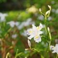 写真: 友人の多い花