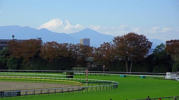 東京競馬場から見た富士山