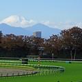 写真: 東京競馬場から見た富士山