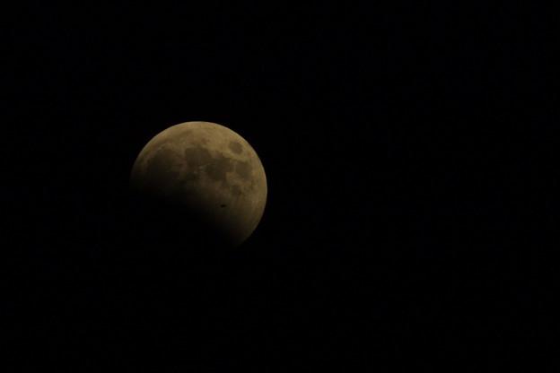 Photos: 皆既月蝕