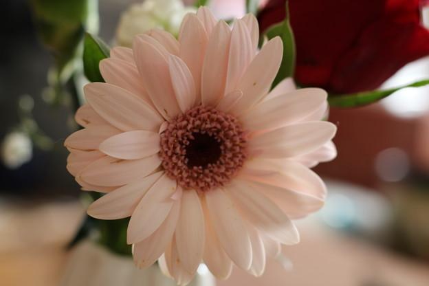 Photos: 花瓶の花