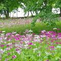湿原を彩る華花