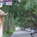 写真: 雨林景洪