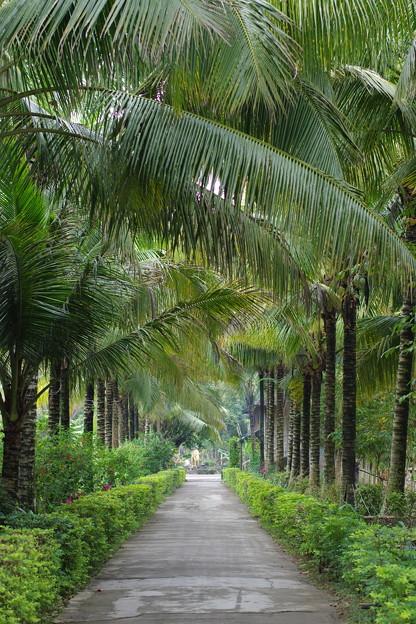 Photos: 椰子並木