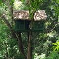 Photos: Tree House