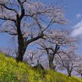 さくら市の春