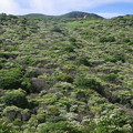 糊空木の山