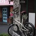 写真: 昭和通り