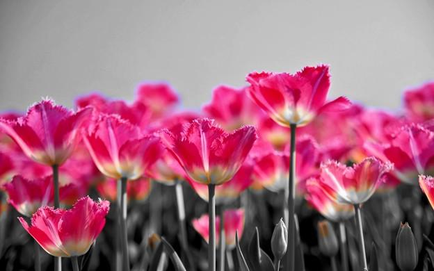 Photos: Floral Magic in Spring(10027)