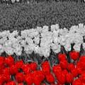 Photos: Floral Magic in Spring(10028)