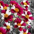 Photos: Floral Magic in Spring(10036)