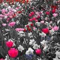 Photos: Floral Magic in Spring(10037)