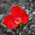 Photos: Lonely Flower(23)