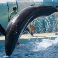 Photos: イルカのジャンプ