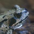 写真: 蛙