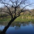 写真: 冬の三ッ池公園