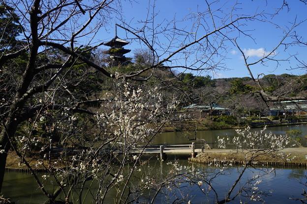 写真: 梅と三重塔