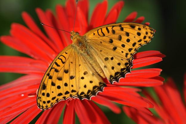 花の上の蝶