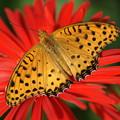 写真: 花の上の蝶