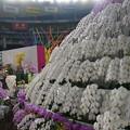 Photos: 蘭の花々