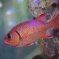 写真: 沖縄の魚