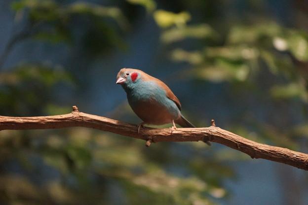 Photos: アフリカの鳥