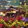 写真: 蘭と熱帯魚のコラボ