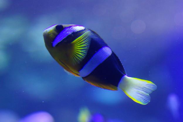 写真: 水槽の魚