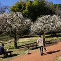 写真: 初春の三ッ池公園